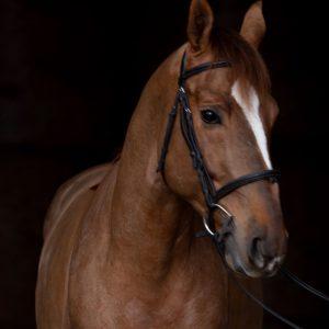 evening-de-re%cc%82ve-horse-competition