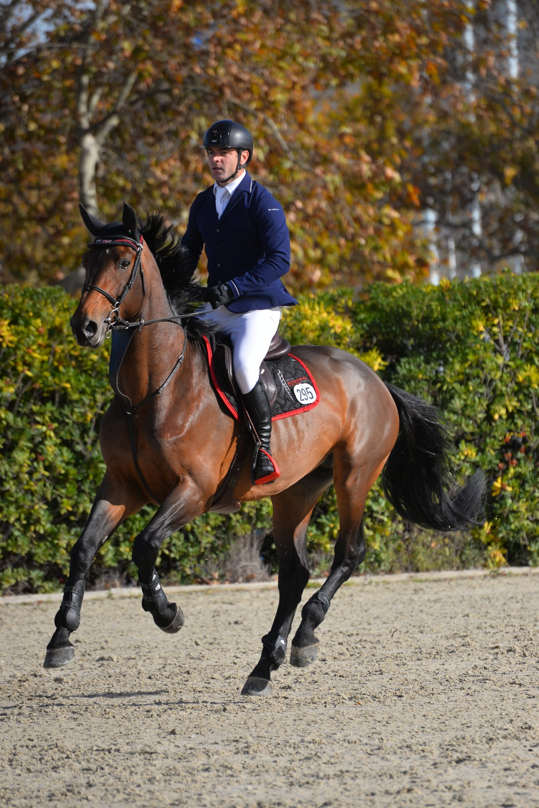 horse-breeding-stable-internationnal-horse-jump-8