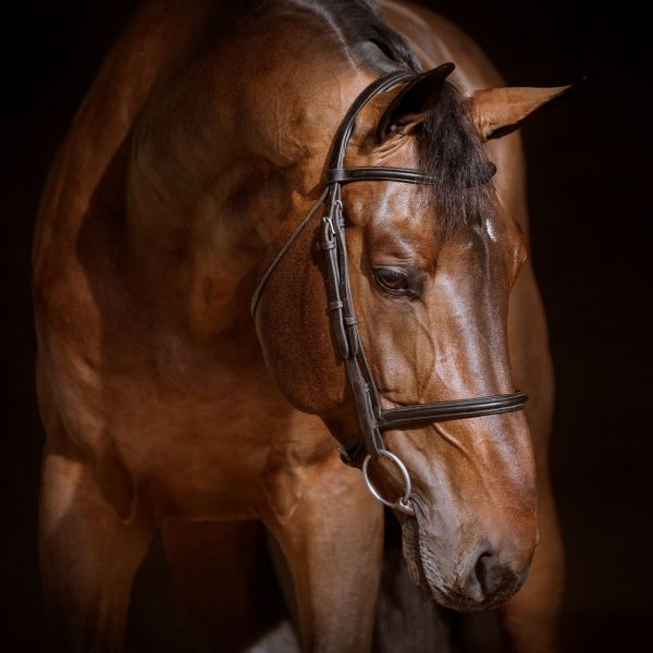 stallion-diamanti-van-de-helle-z