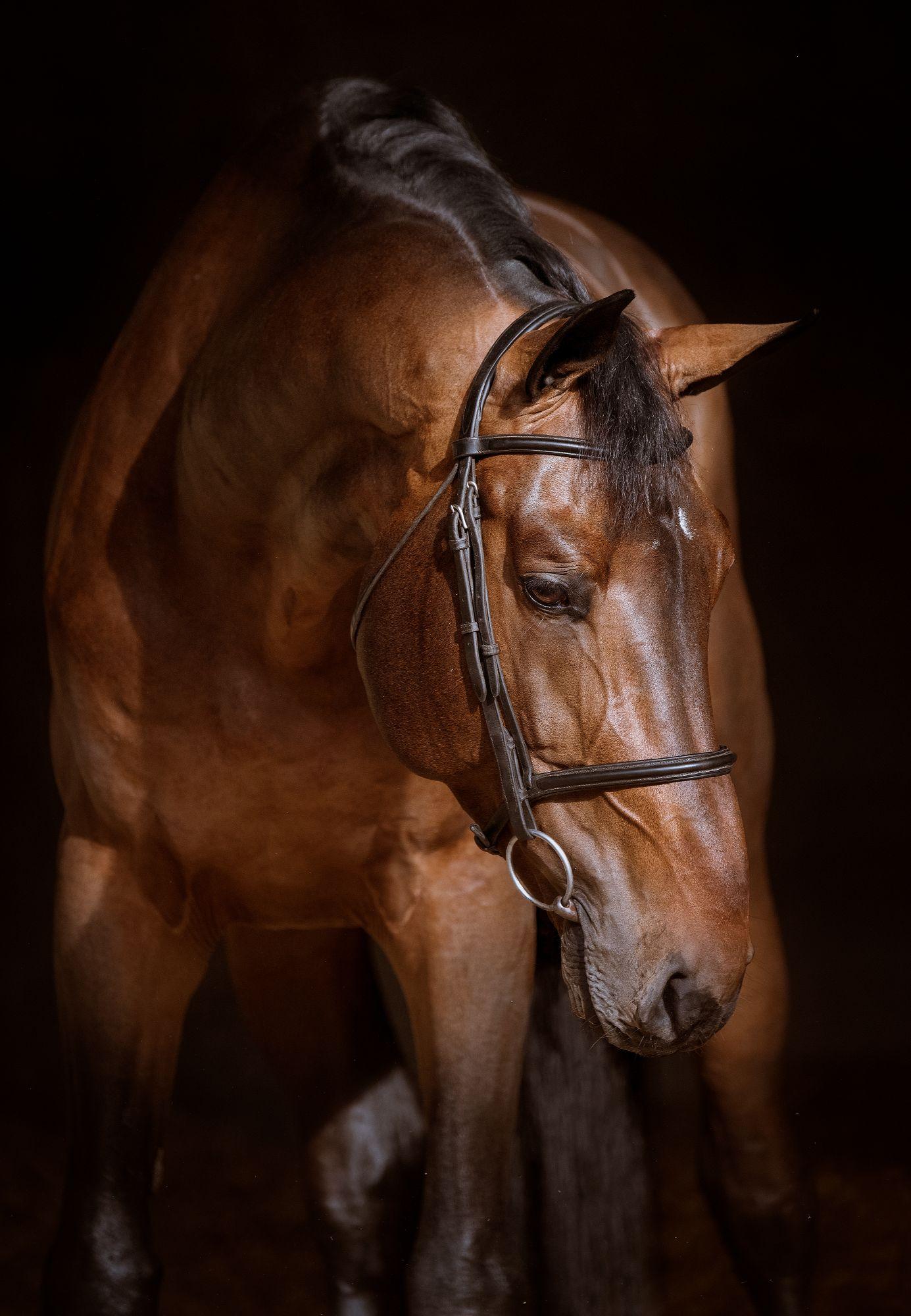stallion-diamanti-van-de-helle-z