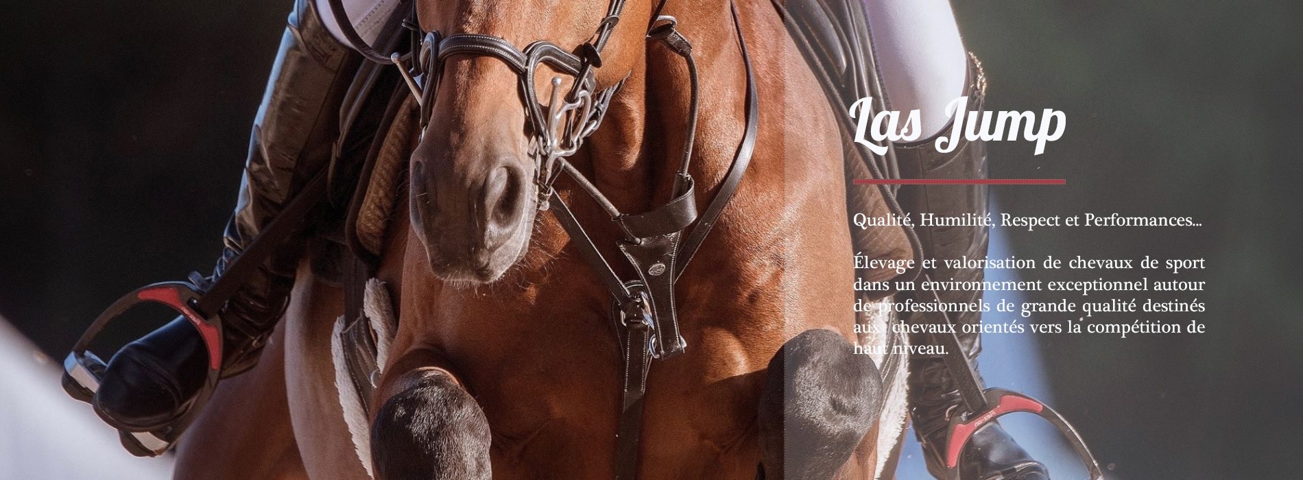 chevaux-sport-las-jump-3