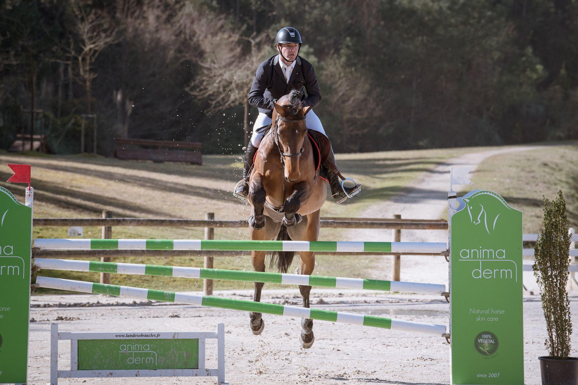 diamanti-van-de-helle-z-las-jump-biarritz-show-jumping-horses-feb-23-rd-2019-2