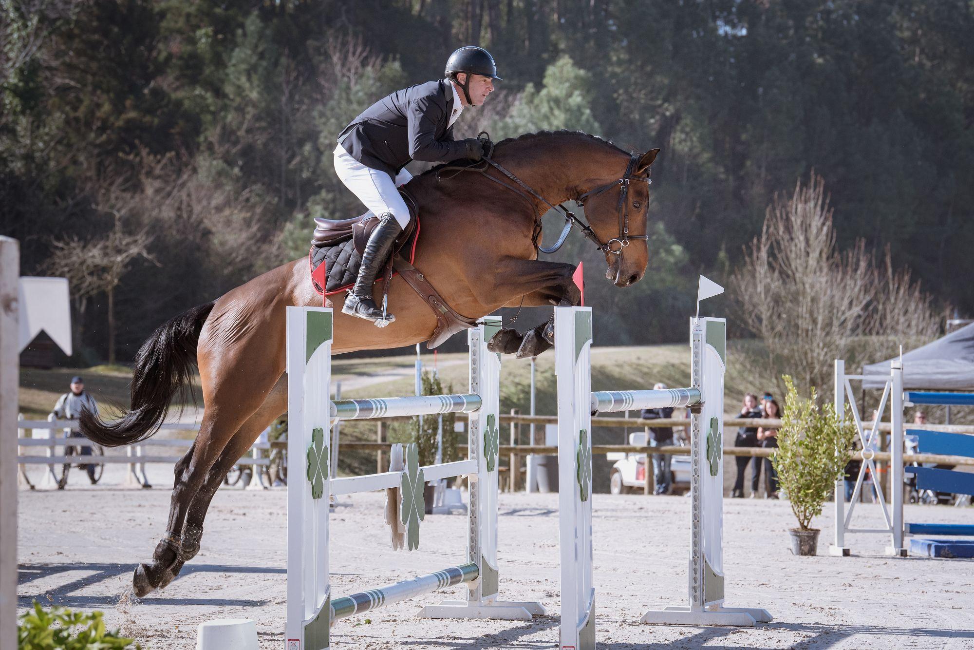 diamanti-van-de-helle-z-las-jump-biarritz-show-jumping-horses-feb-23-rd-2019-3
